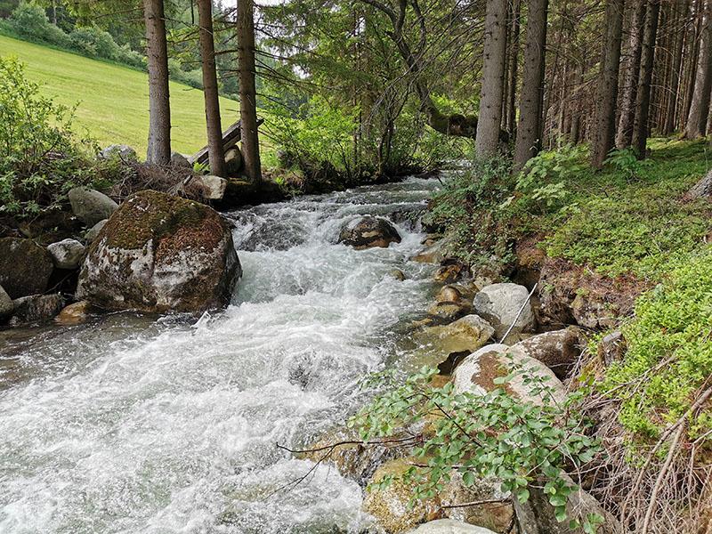 Bach fliesst durch Wald in den Alpen